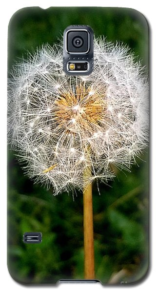 Dandelion 1 Galaxy S5 Case