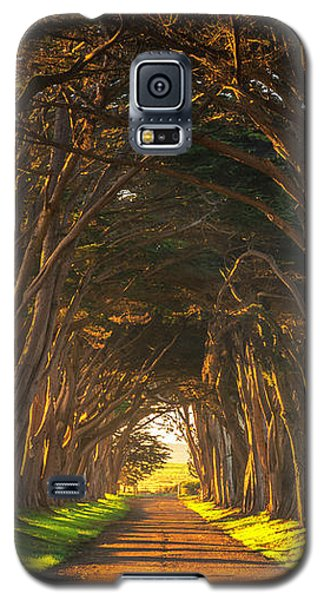 Dawn At The Cypress Tree Tunnel Galaxy S5 Case