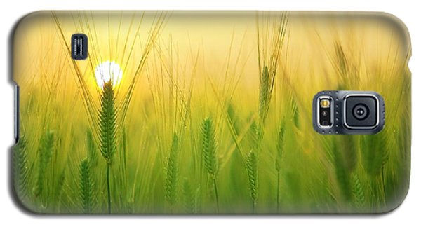 Dawn At The Wheat Field Galaxy S5 Case