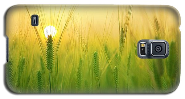 Dawn At The Wheat Field Galaxy S5 Case