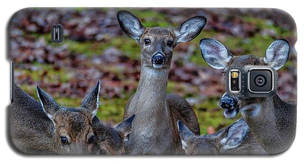 Deer Gathering Galaxy S5 Case