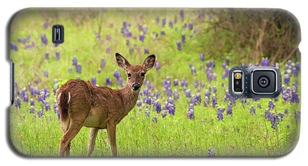 Deer In The Bluebonnets Galaxy S5 Case