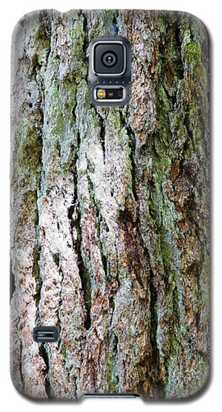 Details, Old Growth Western Redcedars Galaxy S5 Case