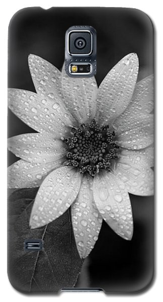Dewdrops On A Sunflower Galaxy S5 Case