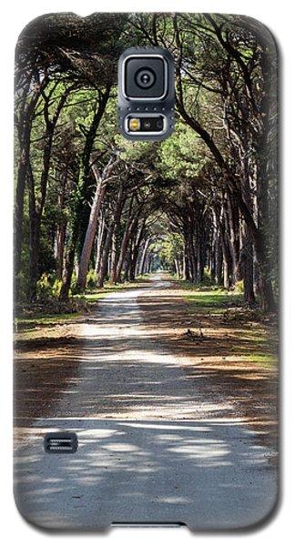 Dirt Pathway In A Mediterranean Pine Forest Galaxy S5 Case