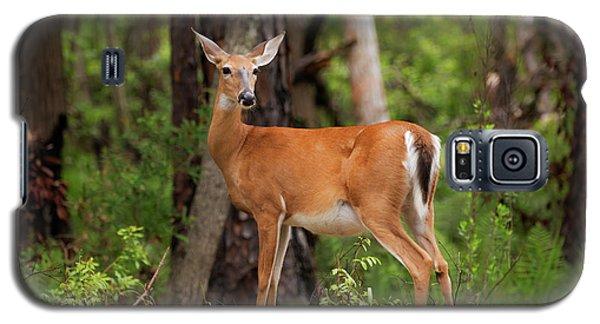 Doe, A Deer, A Female Deer Galaxy S5 Case