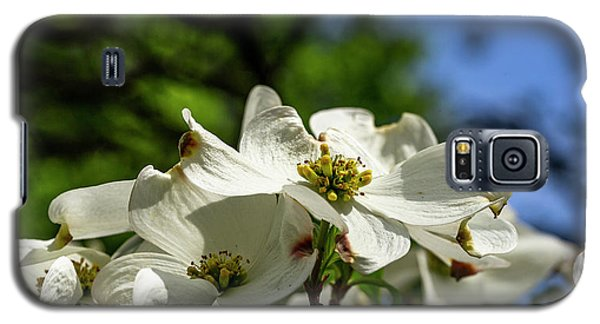 Dogwood Day Afternoon Galaxy S5 Case