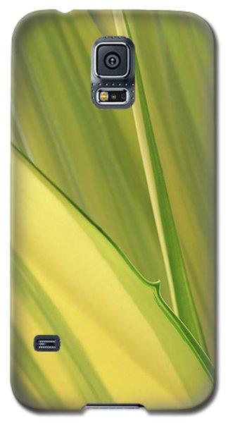 Dreamy Leaves Galaxy S5 Case