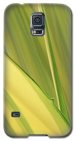 Dreamy Leaves Galaxy S5 Case