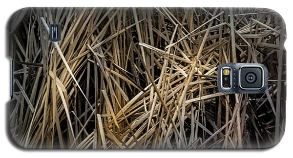Dried Wild Grass IIi Galaxy S5 Case