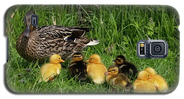 Duck And Cute Little Ducklings Galaxy S5 Case