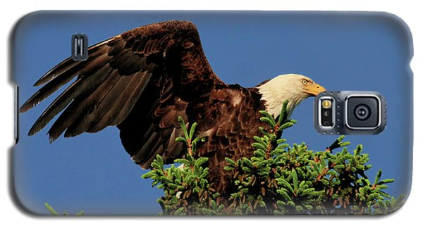 Eagle In Treetop Galaxy S5 Case