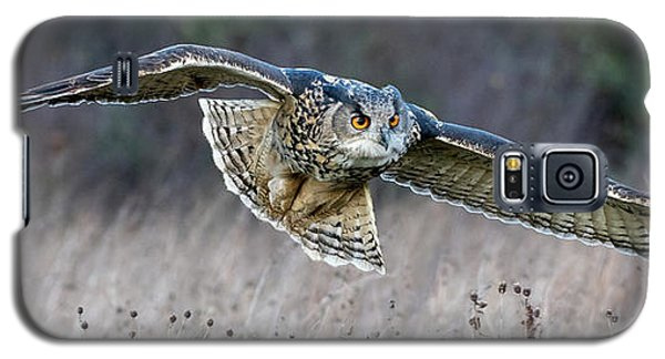 Eagle Owl Gliding Galaxy S5 Case