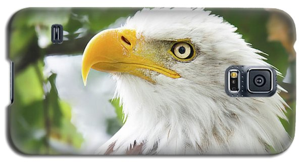 Bald Eagle Perched In A Tree Galaxy S5 Case
