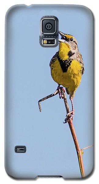Eastern Meadowlark Singing To The Sun Galaxy S5 Case