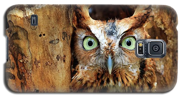 Eastern Screech Owl Perched In A Hole In A Tree Galaxy S5 Case