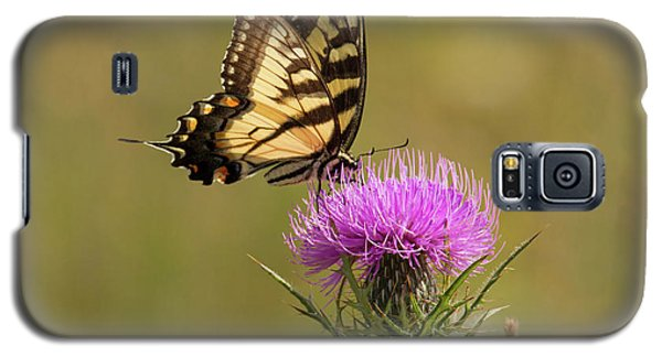 Eastern Tiger Swallowtail Galaxy S5 Case