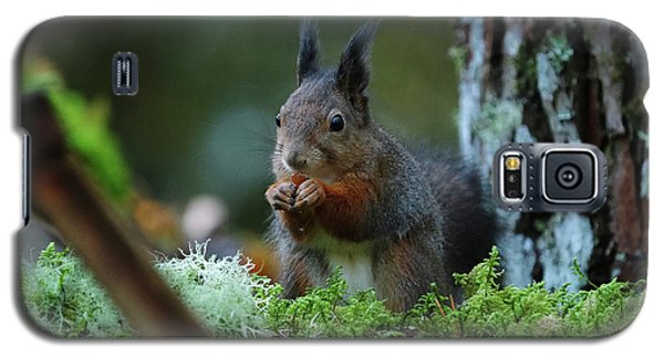 Eating Squirrel Galaxy S5 Case