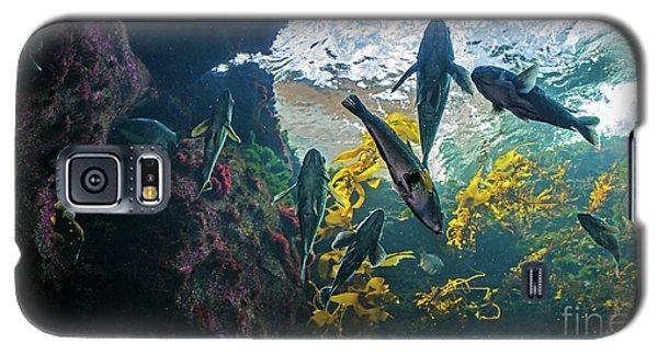 Ecosystem In A Kelp-filled Tank Galaxy S5 Case