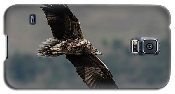 Egyptian Vulture, Sub-adult Galaxy S5 Case