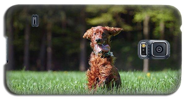 Elf Galaxy S5 Case
