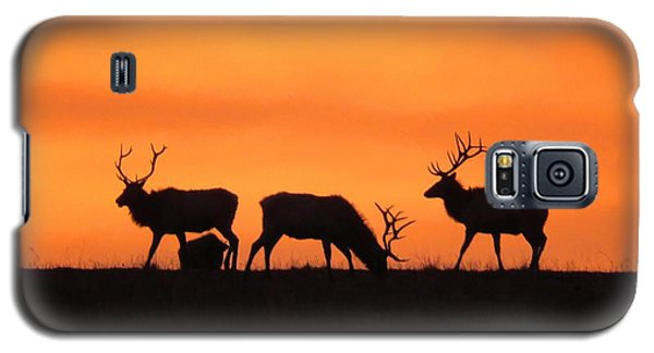 Elk In The Morning Light Galaxy S5 Case