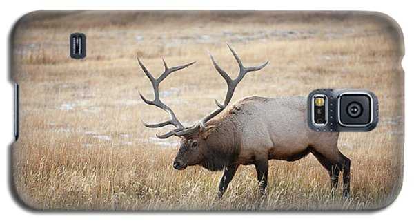 Elk In Yellowstone National Park Galaxy S5 Case