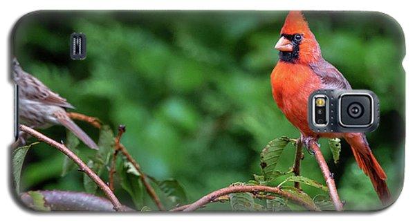 Envy - Northern Cardinal Regal Galaxy S5 Case