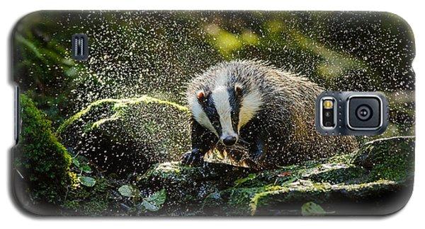 Cold Galaxy S5 Case - European Badger Shaking And Splashing by Stanislav Duben
