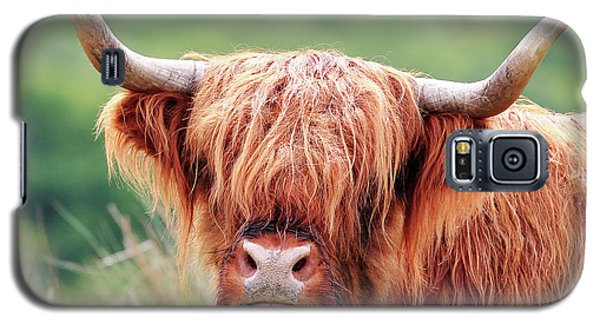 Face-to-face With A Highland Cow Galaxy S5 Case