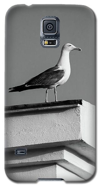Facing The Summer Galaxy S5 Case