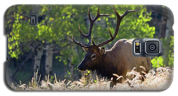 Fall Color Rocky Mountain Bull Elk Galaxy S5 Case