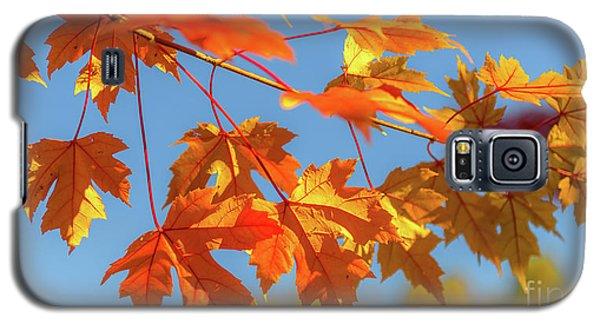Fall Foliage Galaxy S5 Case