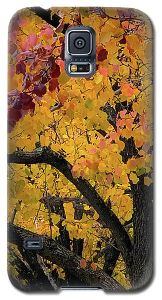 Fall In Carlyle Galaxy S5 Case