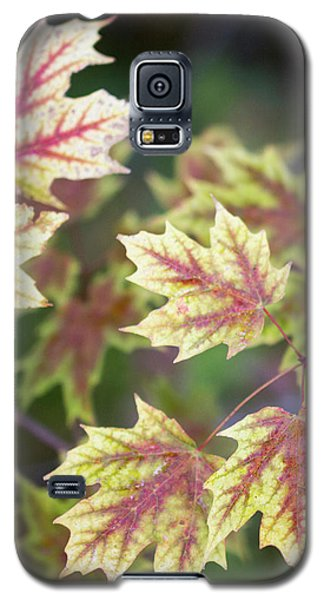 Fall Red And Yellow Leaves 10081501 Galaxy S5 Case