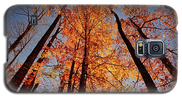 Fall Trees Sky Galaxy S5 Case