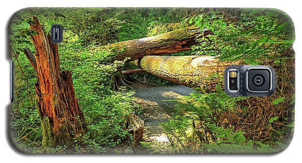 Fallen Trees In The Hoh Rain Forest Galaxy S5 Case