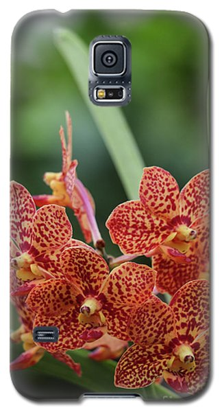 Family Of Orange Spotted Orchids Galaxy S5 Case