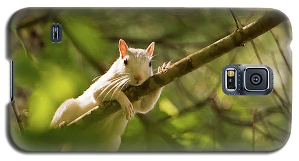 Famous Brevard White Squirrel Galaxy S5 Case