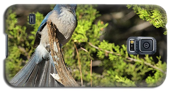 Fanning Scrub Jay Galaxy S5 Case