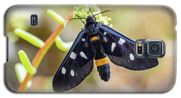 Fegea - Amata Phegea -black Insect With White Spots And Yellow Details Galaxy S5 Case