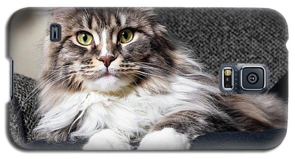 Feline Beauty Galaxy S5 Case