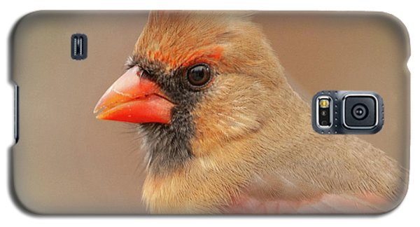 Female Cardinal Portrait Galaxy S5 Case