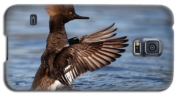 Female Merganser Wings Forward Galaxy S5 Case