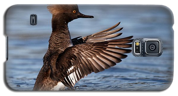 Female Merganser Wings Forward Galaxy S5 Case