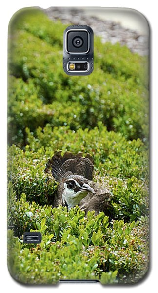 Female Peafowl Among The Bushes In Retiro Park, Madrid, Spain Galaxy S5 Case
