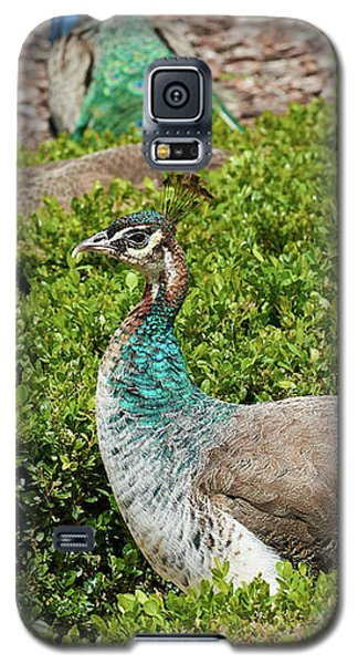 Female Peafowl At The Gardens Of Cecilio Rodriguez In Madrid, Spain Galaxy S5 Case