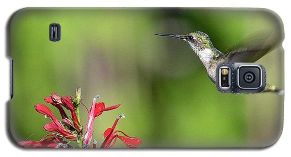 Female Ruby-throated Hummingbird Dsb0320 Galaxy S5 Case