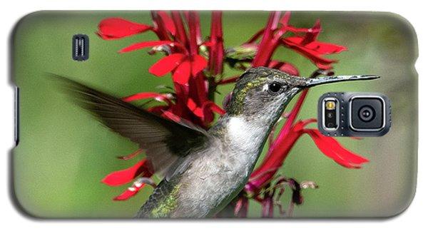 Female Ruby-throated Hummingbird Dsb0325 Galaxy S5 Case