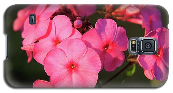 Flaming Pink Phlox Galaxy S5 Case